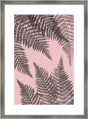 Ferns On Blush Framed Print
