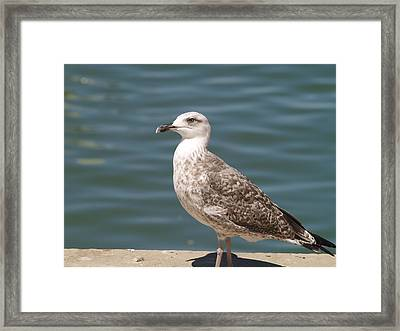 Framed Print featuring the photograph Ferragudo Gull by Michael Canning