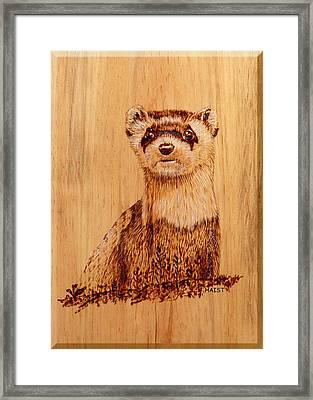 Ferret Framed Print by Ron Haist