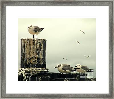 Ferry Hypnosis Framed Print