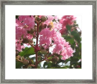 Fertile Myrtle Framed Print