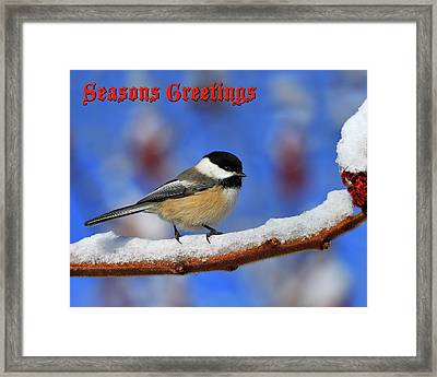 Framed Print featuring the photograph Festive Chickadee by Tony Beck