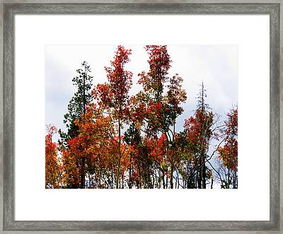 Festive Fall Framed Print