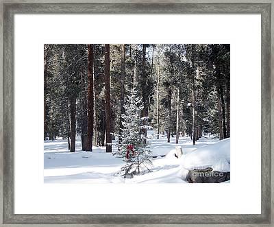 Festive Forest Framed Print
