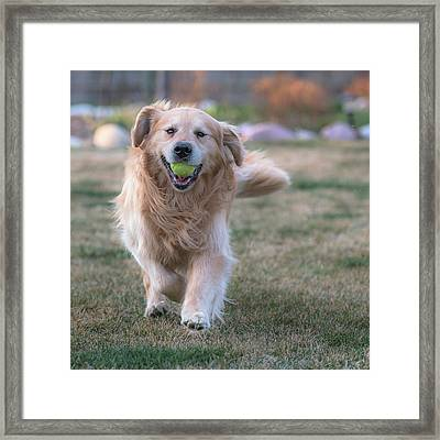Fetch Framed Print