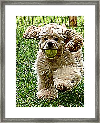 Fetch Framed Print by Laura Brightwood