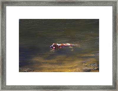 Fetching In The Yanuncay Framed Print