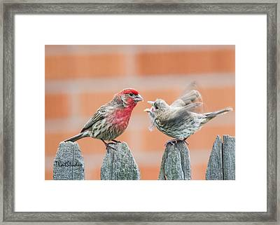 Feuding Finches Framed Print