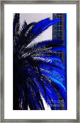 Blue Palms In Miami Framed Print by Carlos Amaro