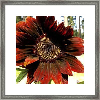 Fibonacci Hues Framed Print