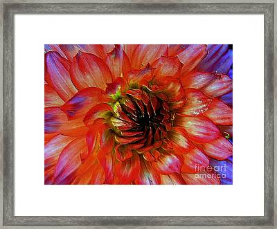 Framed Print featuring the photograph Fickle by Elfriede Fulda