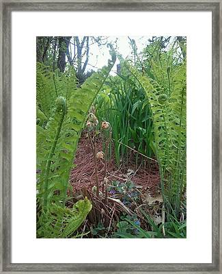 Fiddle Heads Ferns Framed Print