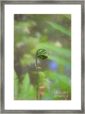 Fiddlehead Fern - Macro Framed Print