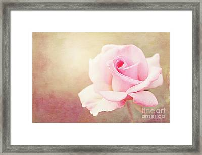 Fidelity Framed Print by Beve Brown-Clark Photography