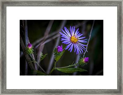 Field  Beauty Framed Print