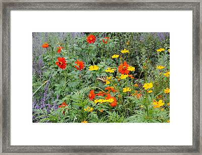 Field Burst Framed Print by Deborah  Crew-Johnson