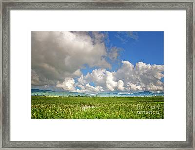 Framed Print featuring the photograph Field by Charuhas Images