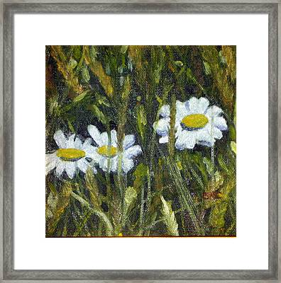 Field Daisies Framed Print by Susan Coffin