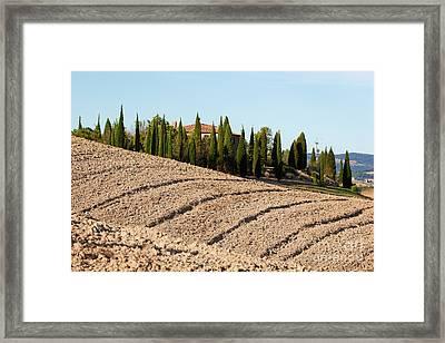 Field, Farm House Among Cypress Trees. Italy Framed Print
