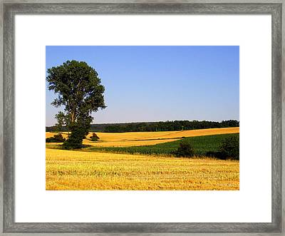 Field Flow Framed Print