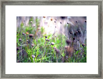 Field Flowers Framed Print