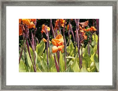 Field For Iris Framed Print