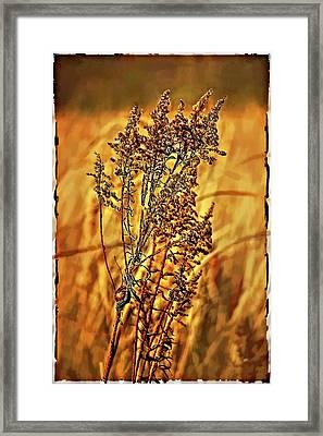 Field Frolic Framed Print by Steve Harrington
