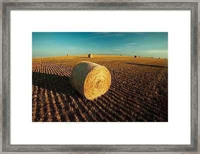 Field Full Of Bales Framed Print