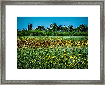 Field In June Framed Print