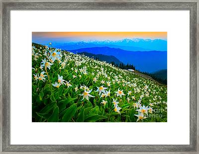 Field Of Avalanche Lilies Framed Print