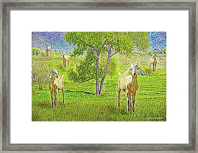 Field Of Baby Goat Dreams Framed Print by Joel Bruce Wallach