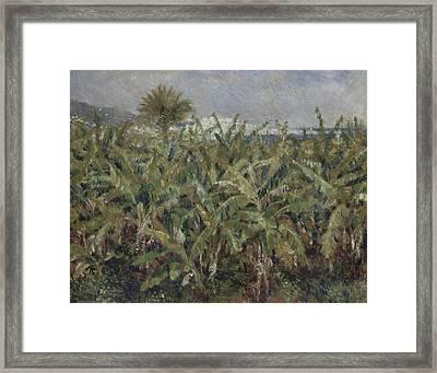 Field Of Banana Trees  Framed Print by Auguste Renoir