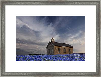 Field Of Blue Bonnets Framed Print by Keith Kapple
