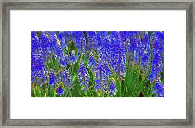 Field Of Blue Framed Print