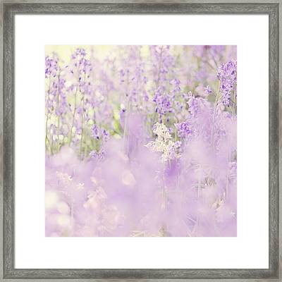 Field Of Bluebells Framed Print by Margaret Goodwin
