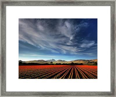 Field Of Color Framed Print