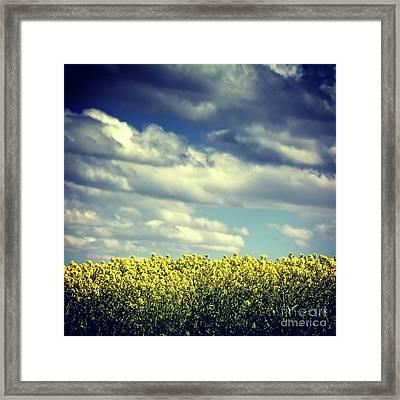 Field Of Colza. Auvergne. France Framed Print