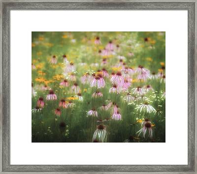 Field Of Coneflowers 5x6 Framed Print
