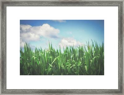 Field Of Corn Framed Print
