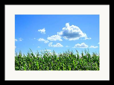 Field Digital Art Framed Prints