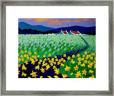 Field Of Daffs Framed Print by John  Nolan