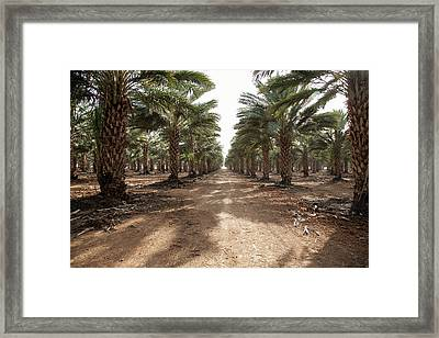 Date Grove #3 Framed Print