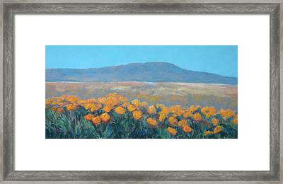 Field Of Dreams Framed Print by Debra Mickelson