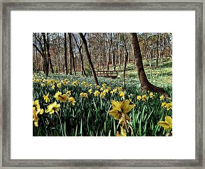 Field Of Daffodils Framed Print
