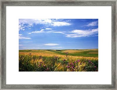 Field Of Dreams Framed Print by Kathy Yates