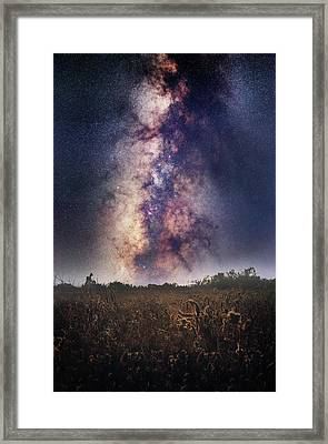 Field Of Dreams Framed Print by Matt Smith