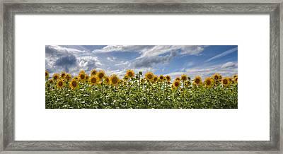 Field Of Dreams Panorama Framed Print by Debra and Dave Vanderlaan