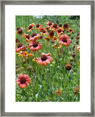 Field Of Flower Eyes Framed Print