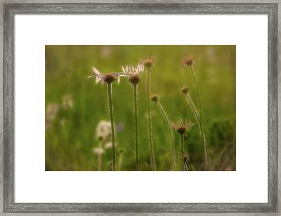 Field Of Flowers 2 Framed Print