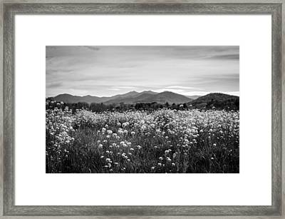 Field Of Flowers In Black And White Framed Print